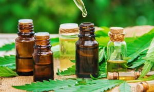 CBD oil for horses: How Much Is Enough